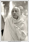 His Divine Grace A.C. Bhaktivedanta Swami Prabhupada  Founder Acarya of the International Society for Krishna Consciousness