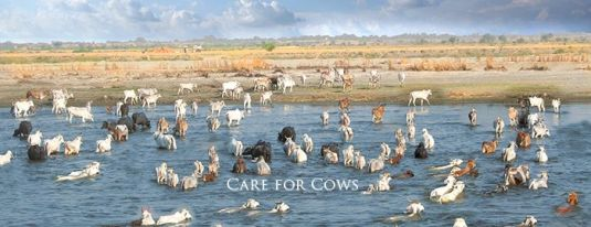 Care for cows on facebook