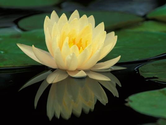 lotus flower in Autumn